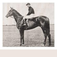 Dagens hästporträtt